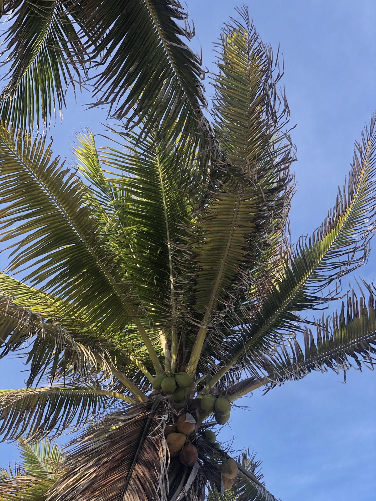 photograph of a palm tree