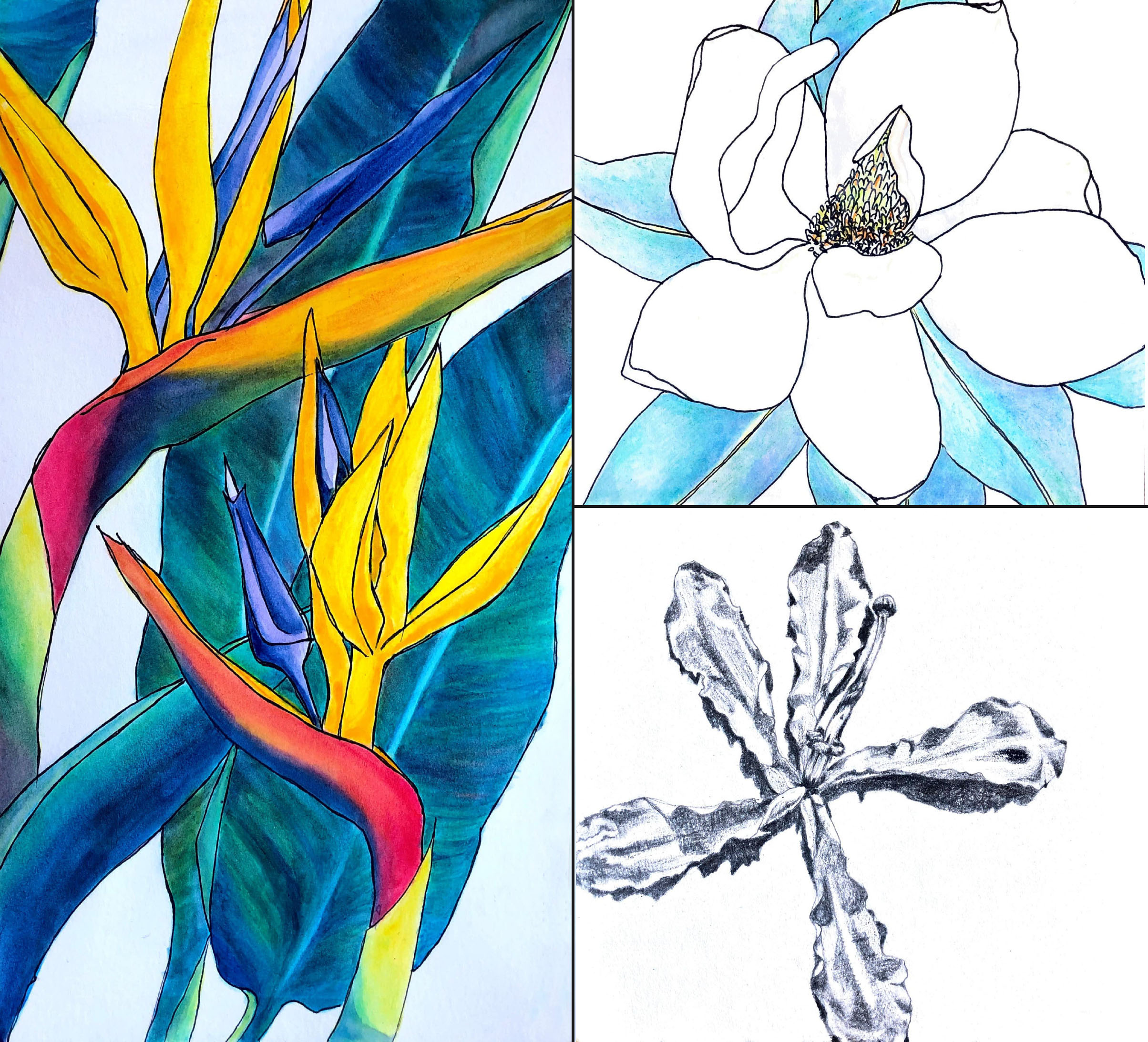 fine art flowers, colored pencil and watercolor on paper